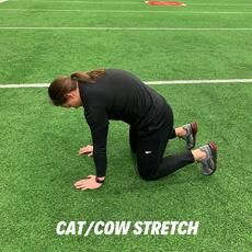 Orthopedic institute athletic trainer demonstrates the cat or cow stretch to help relieve low back pain.
